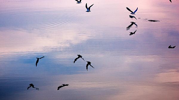 seagulls7616